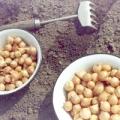 Чим підгодувати цибуля-севок?