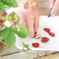Як виростити розсаду ремонтантної суниці з насіння?